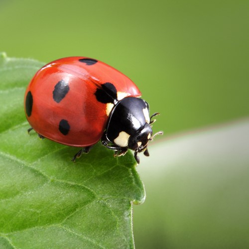 Three Bugs to Improve Your Lawn and Garden