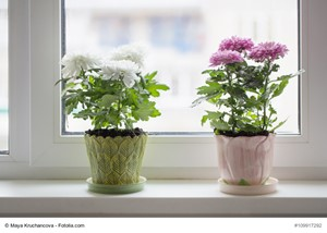 The Unknown Ways Houseplants Help Us
