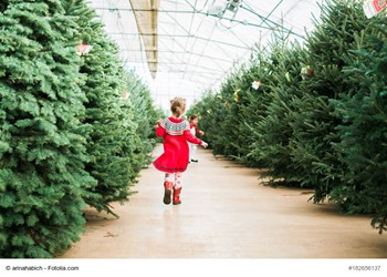 The Ultimate Guide To Choosing A Perfect Christmas Tree