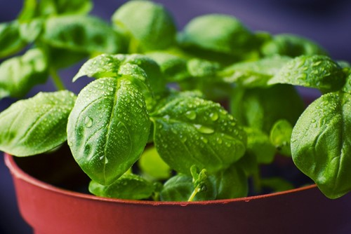Six Savory Herbs to Spice up Your Favorite Dishes