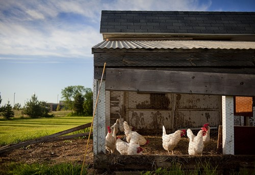 Will Your Property Allow You to Raise Livestock?