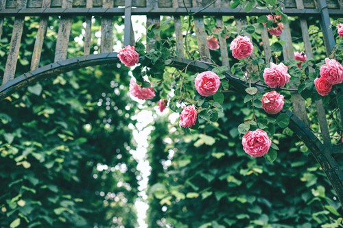 Incorporate a Garden Arbor or Trellis