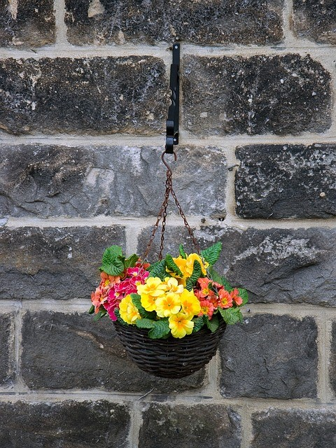 Create and Maintain a Beautiful Hanging Basket
