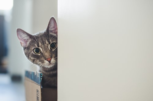 Preparing Your Pets for Your Move