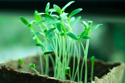 Tips for Starting Seeds in Your Home