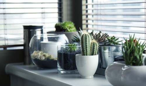 How to Cultivate Succulents Indoors