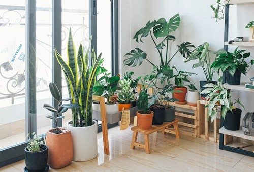 5 Tips for Healthy Houseplants