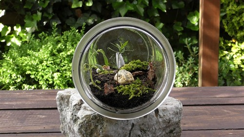 Build a Terrarium