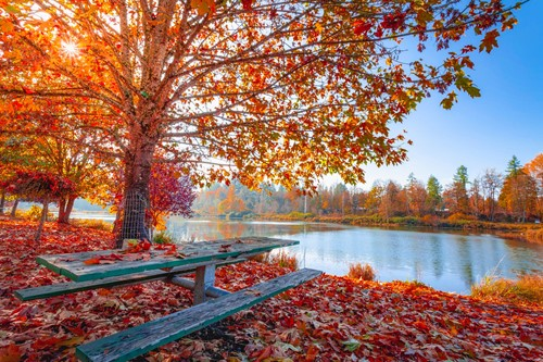 Fall Leaf Peeping: Where to Find the Best Fall Leaves on the East Coast
