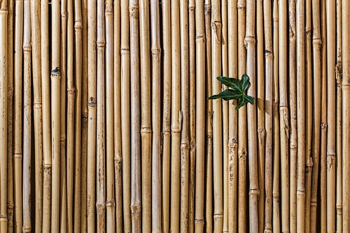 Sustainability: Eco-Friendly Building Materials for Your Home DIY Projects