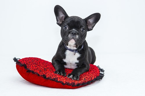 Pets: Creating Your Pets' New Favorite Spot