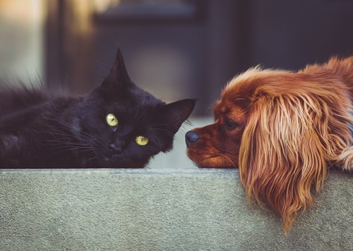 What To Do with Pets When You Show Your Home