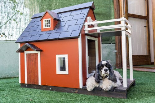 Pets: How Your Furry Family Members Could Help You Sell Your Home