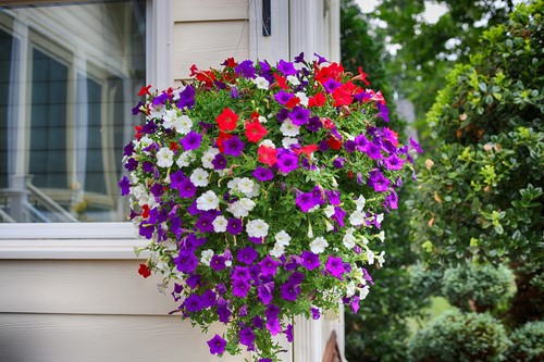 Heat Tolerant Annuals for Southern Gardens