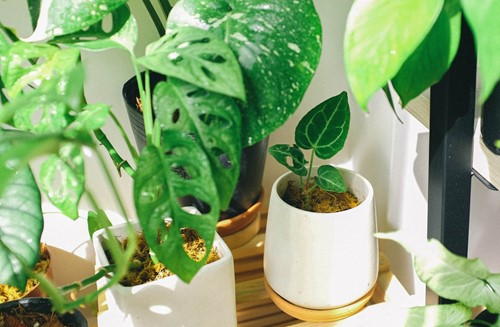 3 Expert Tips for Moving With Houseplants