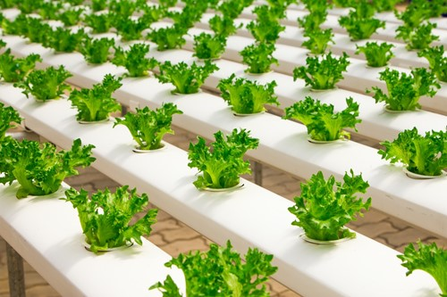 Hydroponics at Home: How to Set Up Your Indoor System