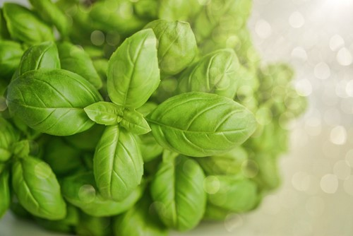 Herb Gardens: How to Start One From Your Windowsill