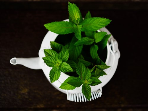 No Pots, No Problem: 3 Ways to Make Your Own Planters From Everyday Items