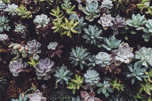 Succulent Benefits: Why You Need These Plants in Your Life