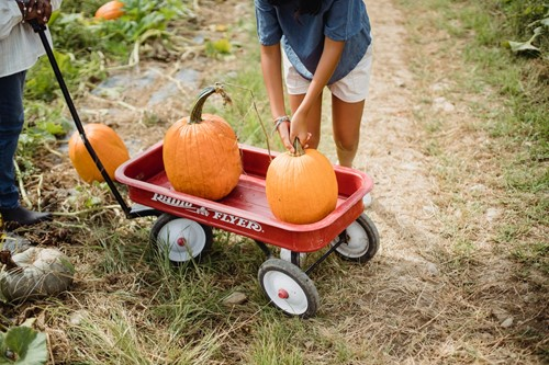 Seasons: How to Prepare for a Pumpkin Carving Party