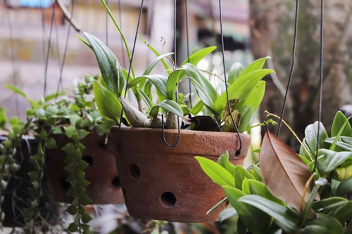 5 Indoor Plants That are Nearly Impossible to Kill