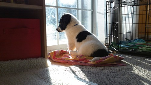 Tips to Help Keep Your Pets Safe While They're Home Alone