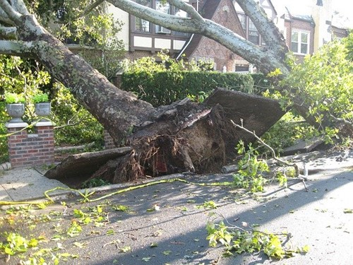 Choosing Trees and Shrubs That Withstand High Winds