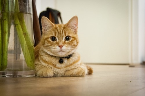 Pets: How to Keep Your Floors and Pets Happy