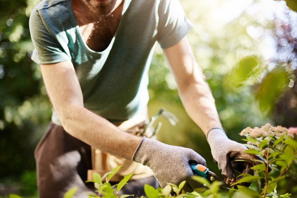 Essential Tips for Garden Maintenance