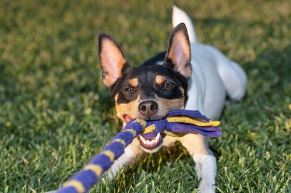 Fun Activities for Your Dogs