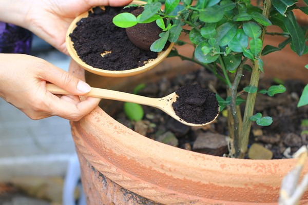Eco-Friendly Things You Can Do with Used Coffee Grounds