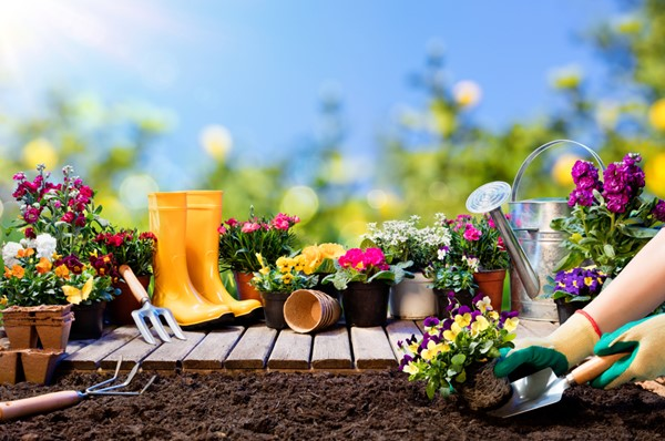 7 Tips to Care for Your Garden