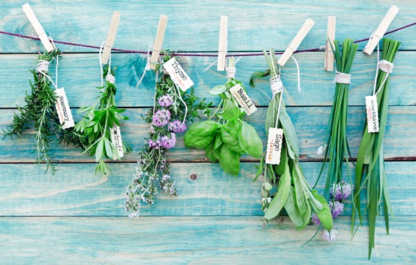 How to Grow Herbs in Your Garden