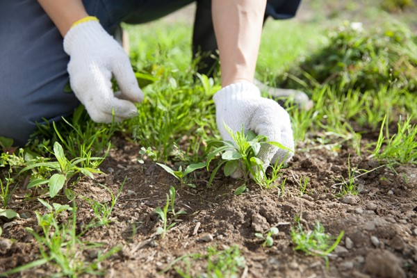 Organic Weed Control for Your garden