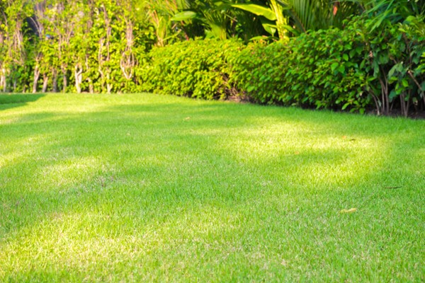 Choosing the Right Cold Weather Sod for Your Yard
