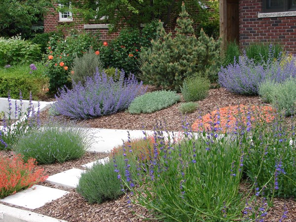 Basic Facts About Xeriscaping