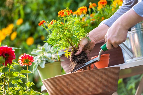 Tips for Starting a Garden