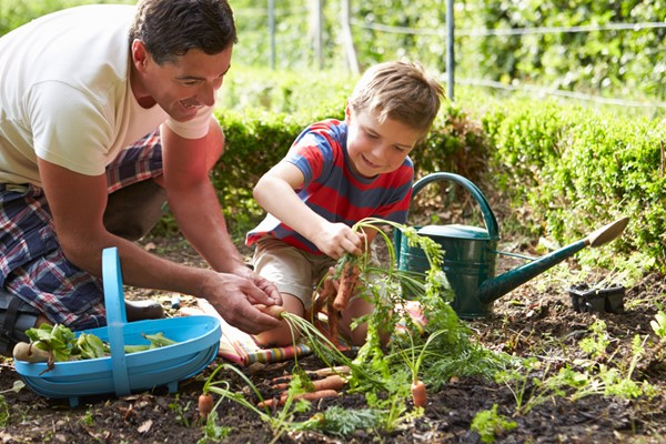 Guide to Planting Summer Vegetables and Herbs