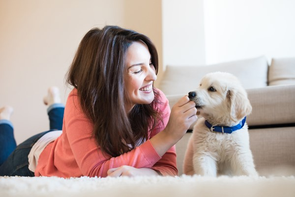 Surviving With a New Puppy in Your Home