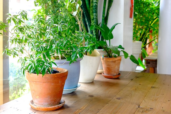 Best Indoor Plants to Have