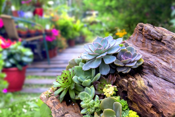 Xeriscaping With Succulents in Your Yard