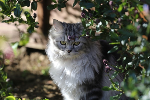 5 Ideas to Keep Cats Out of Your Garden