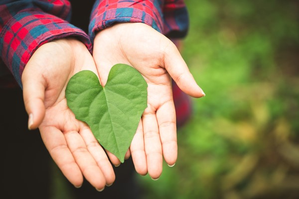 3 Indispensable Reasons to go Green