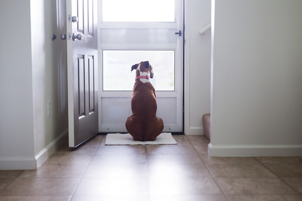 Downsizing With Your Pets - Indoor Space