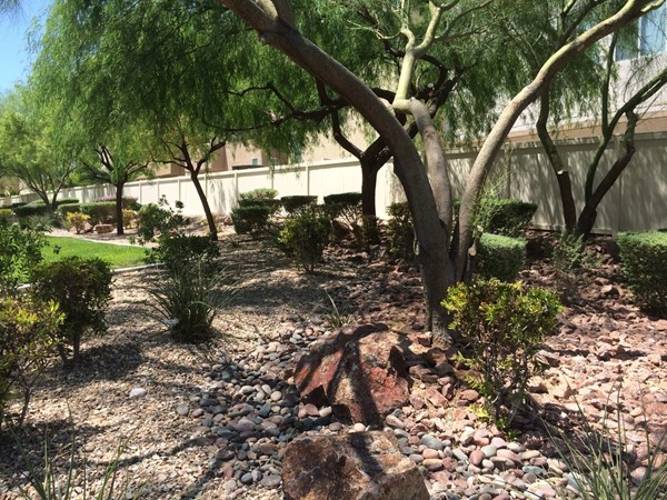 Xeriscaping With Trees in Your Yard