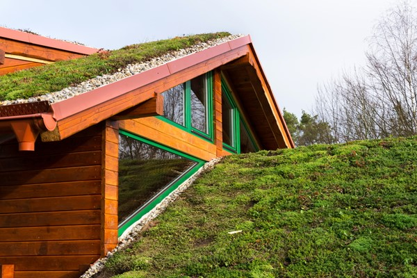 Benefits of Having A Green Roof on Your Home