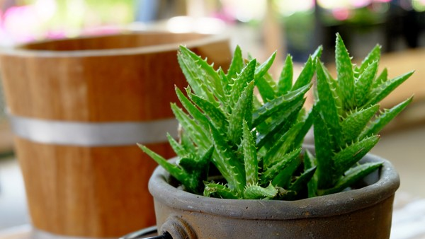 Green Your Garden with Drought-Tolerant Plants