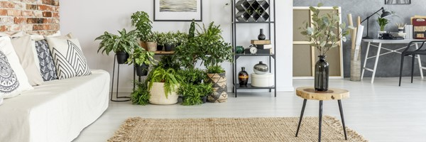 Houseplants That Can do Well in Low Light Conditions