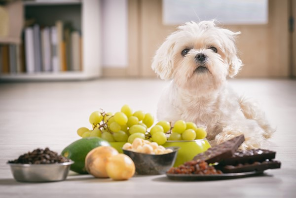Watch Out for These Toxic Foods For Pets