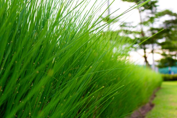 Selecting the Right Grass for Your Yard